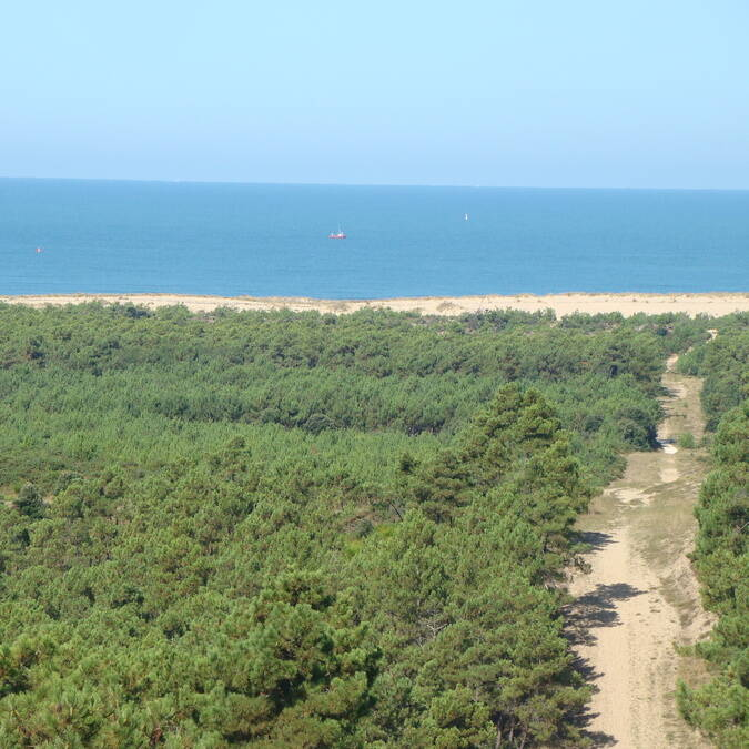 The cote sauvage, the forests and the sea © Elsa COEFFE / CMT